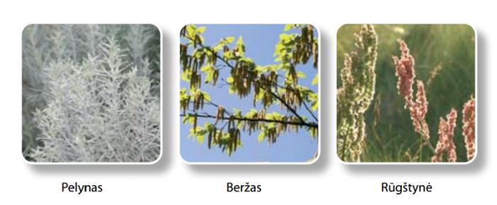 augalu-ziedadulkes