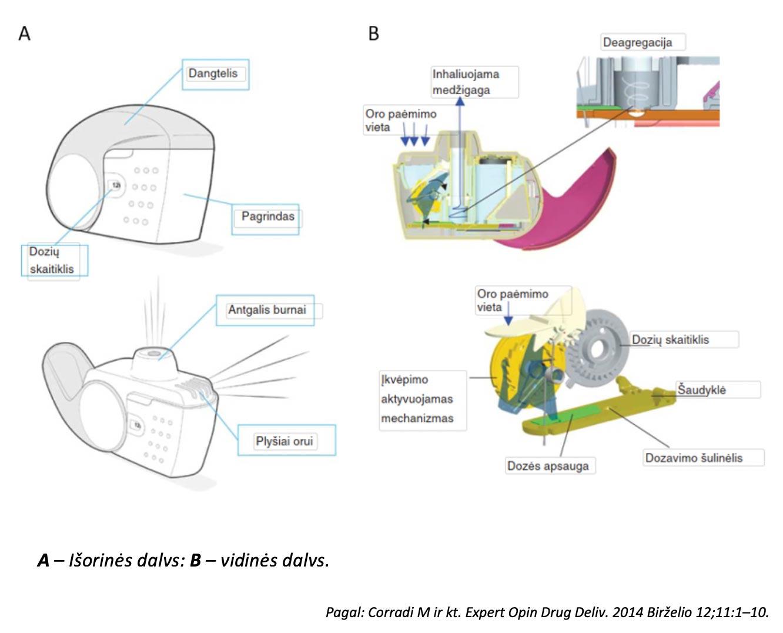 NEXThaler-MI-dalys-ir-veikimo-mechanizmas